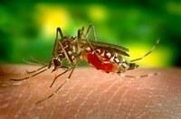 A Turminha está em campanha contra a dengue