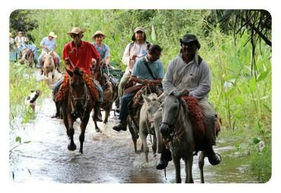 Pantanal. Foto: Nathaly Feitosa