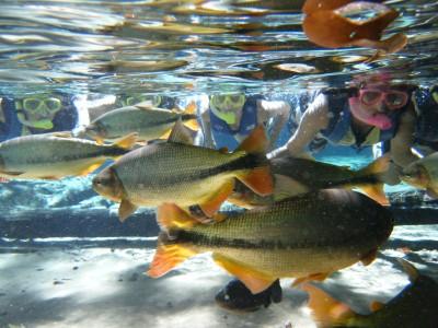 Flutuação no rio. Foto: Secom/MT