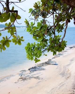 Praia do Gunga. Foto: Francisco Barros