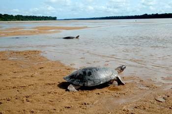 Rio Branco (tartarugas). Foto Jorge Macedo, Detur