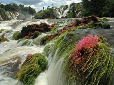 Parque Nacional das Montanhas do Tumucumaque (Cachoeira do Desespero). Foto Zig Koch