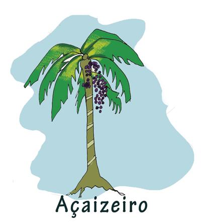 Ilustração texto Pará