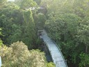 Alta floresta