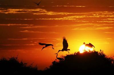 Aves do Pantanal mato-grossense. Foto: Secom/MT