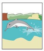 icone-golfinho-RN.jpg